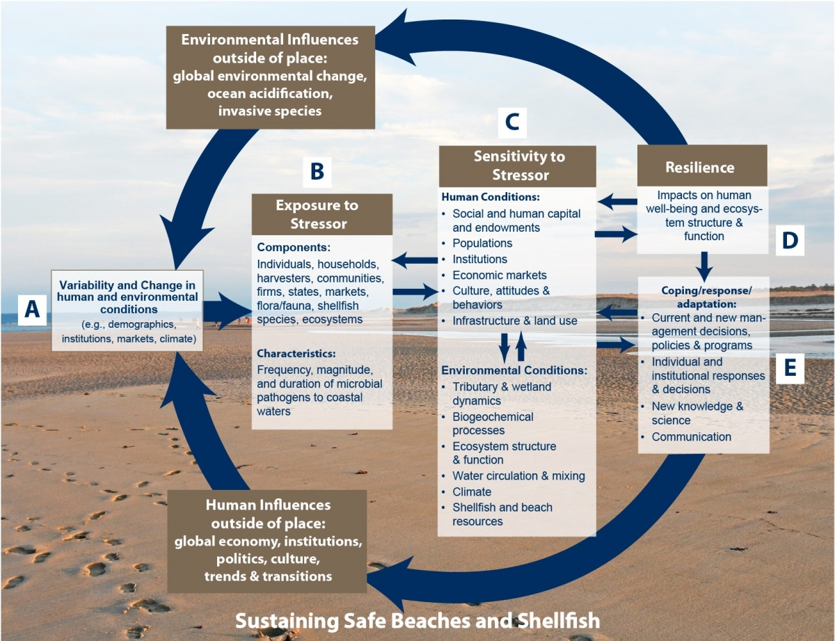 Safe Beaches and Shellfish - Project Outcomes | New England